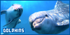 Dolphins: